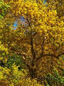 Wonderful Yellows, Kelly Drive, Phialdelphia, PA