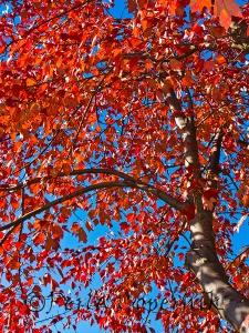 Orange Red against blue, Gaithersburg, Maryland