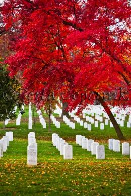 Beautiful Red Fall