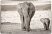 Mara_Elephants-103-BW2