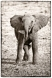 Mara_Elephants-133-BW-copy