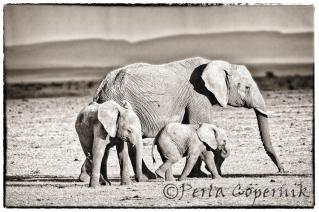 Female Elephant with Baby elephants