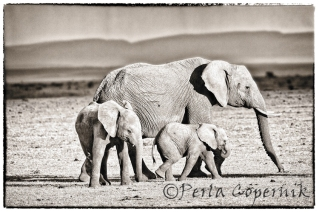Female Elephant with Baby elephants