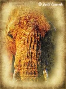 elephant, masai mara, Kenya, Africa Ilegal wildlife trade