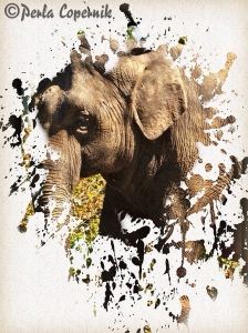 Asian Elephant, illegal wildlife trade