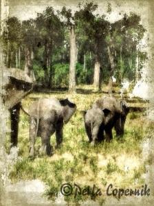 African Elephant Family, masai mara, kenya, africa,