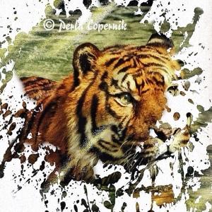 tiger, wildlife illegal trade