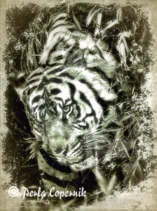 tigers, ilegal wildlife trade