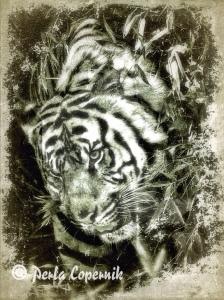 tigers, ilegal wildlife trade