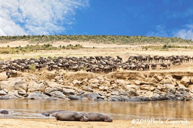 Endangered Ecosystem